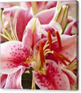 Graceful Lily Series 15 Canvas Print