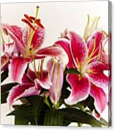 Graceful Lily Series 9 Canvas Print
