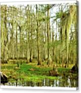 Grand Bayou Swamp  Canvas Print