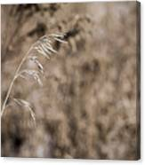 Grass Blade Canvas Print