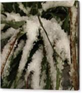 Grass In Snow 2 Canvas Print