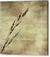 Grass Seeds Canvas Print