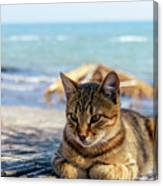 Gray Cat On The Background Of The Sea 1 Canvas Print