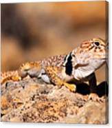 Great Basin Collared Lizard Canvas Print