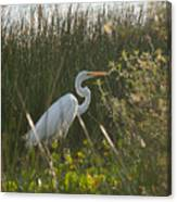 Great Egret At Coba Village Canvas Print