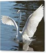 Great Egret Wings Canvas Print