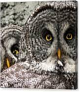 Great Grey Wake Up Canvas Print