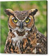 Great Horn Owl Nature Educator Canvas Print