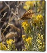 Great Spangled Fritillary 2 Canvas Print
