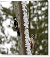 Great Spotted Woodpeckers Canvas Print