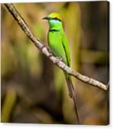 Green Bee-eater Canvas Print