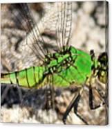 Green Dragonfly Closeup Canvas Print