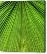 Green Lines Canvas Print