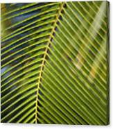 Green Palm Leaf Canvas Print