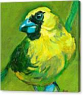 Greenie Canvas Print