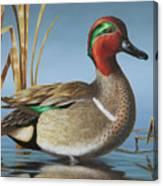 Greenwing Teal Drake Canvas Print