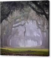 Greenwood's Oak Alley Canvas Print