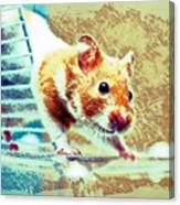 Hamster Canvas Print
