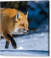 Handsome Mr. Fox Canvas Print