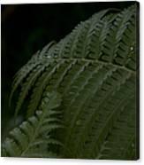 Hapuu Pulu Hawaiian Tree Fern  Canvas Print
