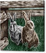 Hare Line  Canvas Print