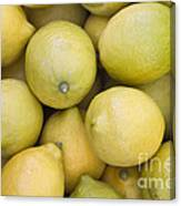 Harvested Lemons Canvas Print