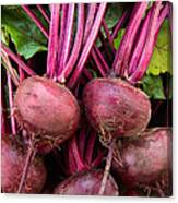 Harvested Organic Beets Canvas Print