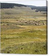 Hayden Valley Herd Canvas Print