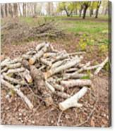 Heap Of Cut Wood Canvas Print