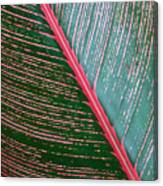 Heliconia Leaf Canvas Print
