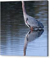 Heron Reflection Canvas Print