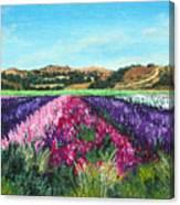 Highway 246 Flowers 3 Canvas Print
