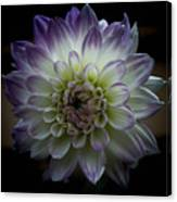 Hint Of Lilac Canvas Print