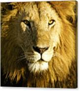His Royal Highness Canvas Print