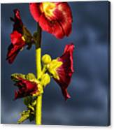 Hollyhock And Storm Clouds Canvas Print