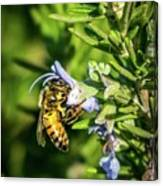 Honey Bee On Bush Canvas Print