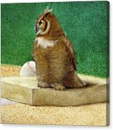 Hoos On First... Canvas Print