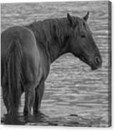 Horse 10 Canvas Print