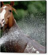 Horse Bath II Canvas Print