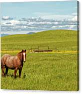 Horse Grazing Canvas Print