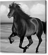 Horses in Paradise  RUN Canvas Print
