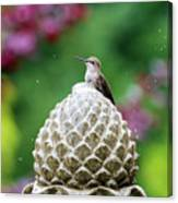 Hummingbird On Garden Water Fountain Canvas Print