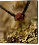 Hungry Caterpillar Canvas Print