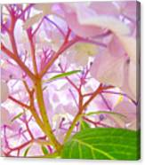 Hydrangeas Flowers Art Prints Hydrangea Art Giclee Baslee Troutman Canvas Print