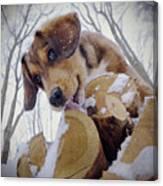 Iced-lolly Canvas Print