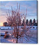 Icy Tree At Sunset  Canvas Print