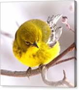 Img_0001 - Pine Warbler Canvas Print