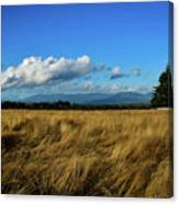 Into The Grasslands. Canvas Print