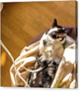 Intravenous Drip Cat Canvas Print