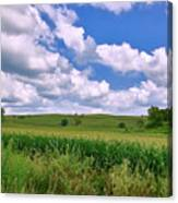 Iowa Cornfield Canvas Print